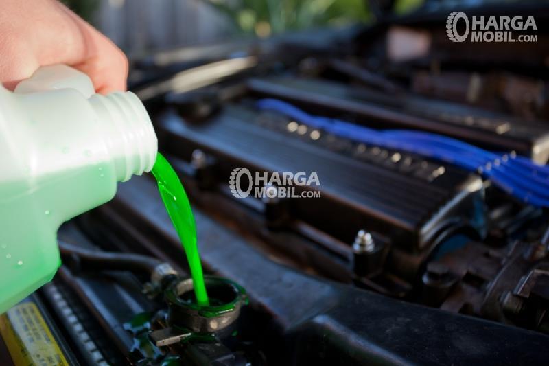 Seorang pria menuangkan cairan radiator hijau dalam mesin mobilnya