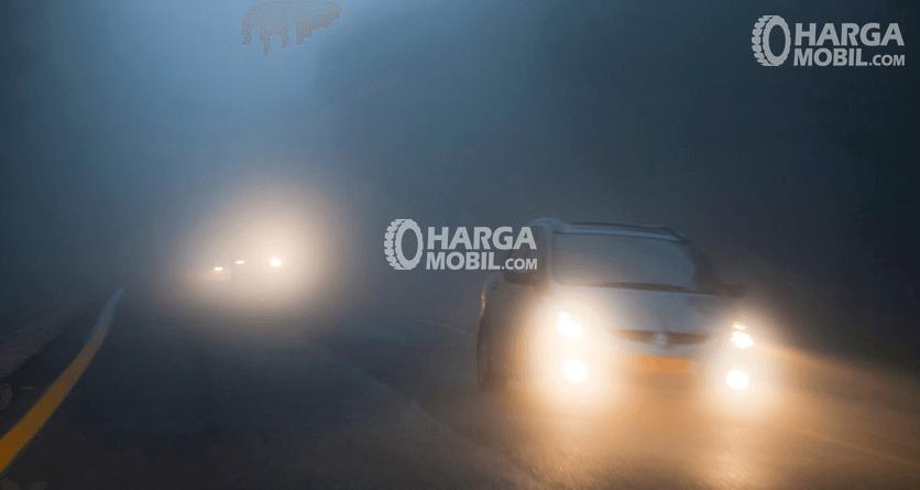 Gambar ini menunjukkan sebuah Mobil dengan lampu depan menyala berjalan dengan kabut yang tebal