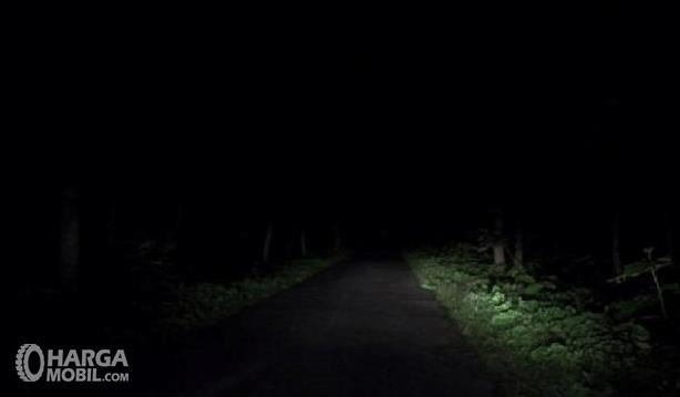Gambar ini menunjukkan jalanan yang gelap dengan kanan kiri pohon