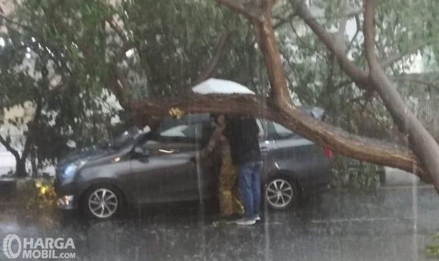 Gambar ini menunjukkan pohon menimpa mobil di jalan