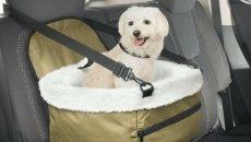Jangan Panik, Berikut Tips Bersihkan Kotoran Hewan Peliharaan Di Kabin Mobil